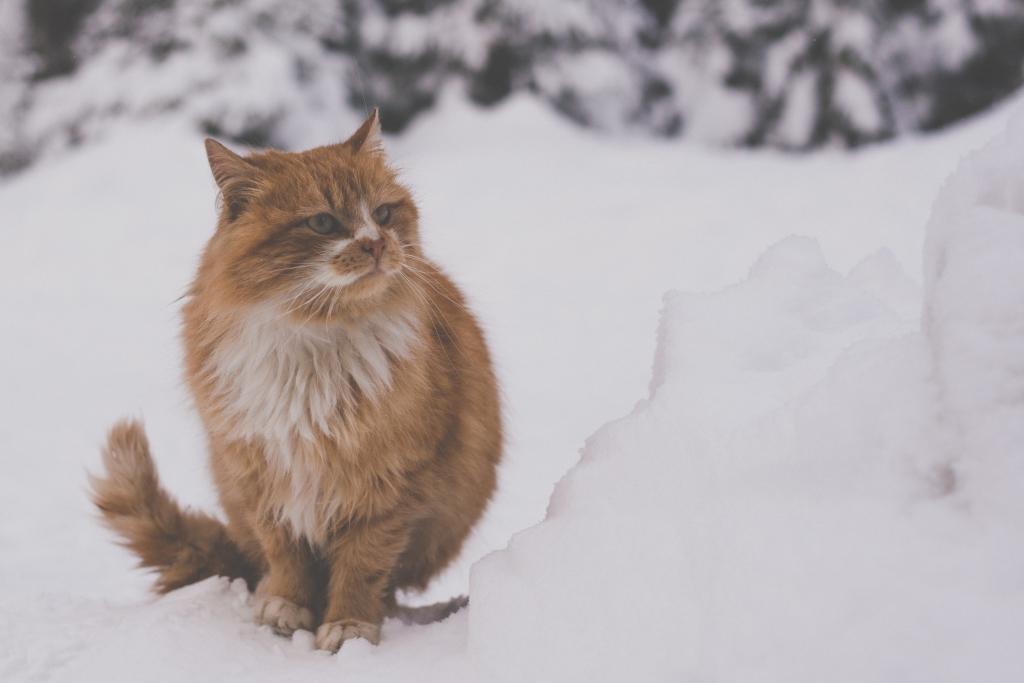 Фотокореспондент: Ярослава Лихачова